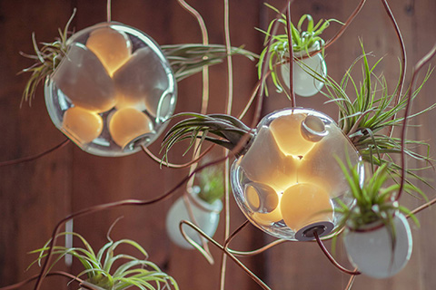 detail of bocci 38 pendant light with air plants
